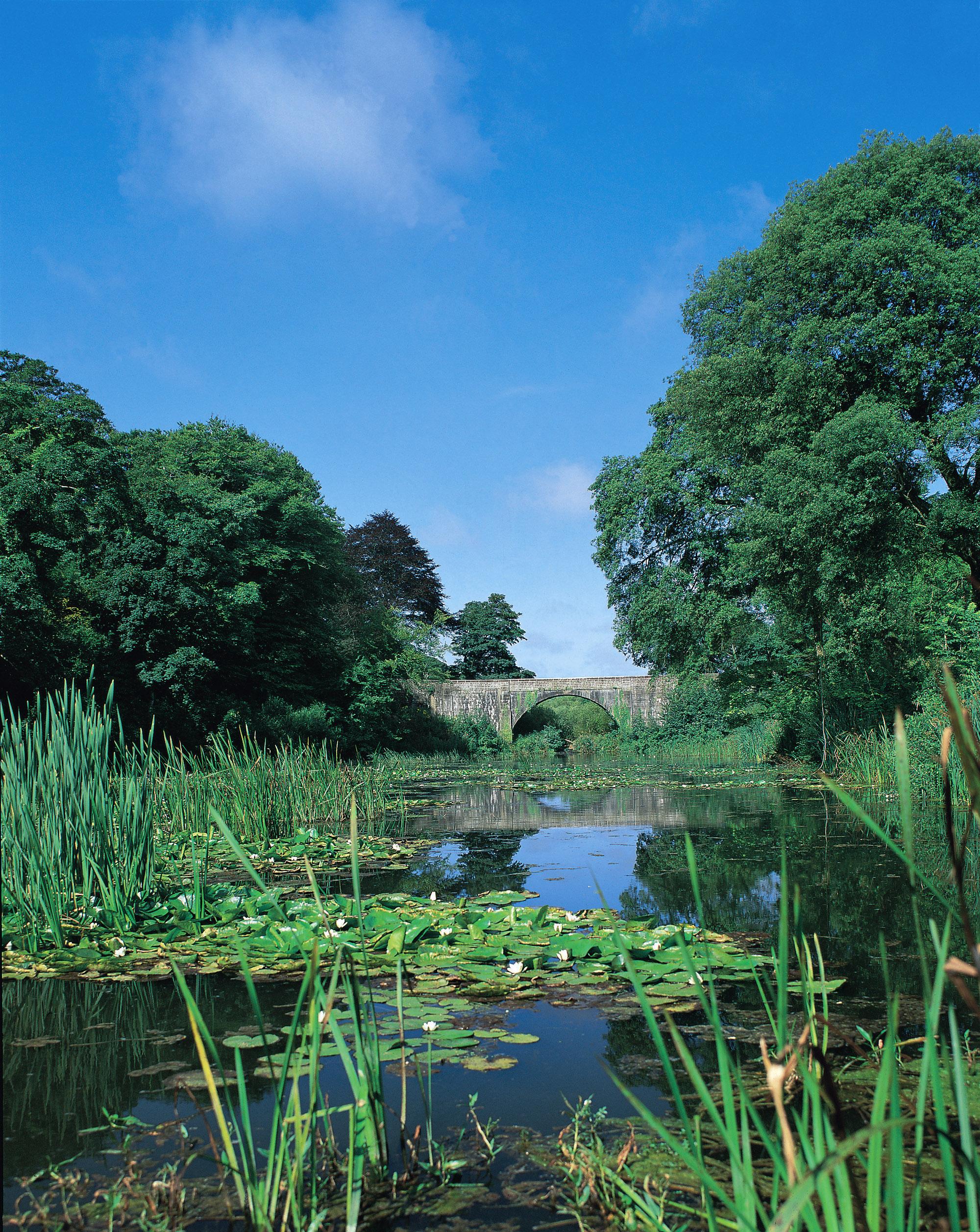 Bosherston Lily Ponds