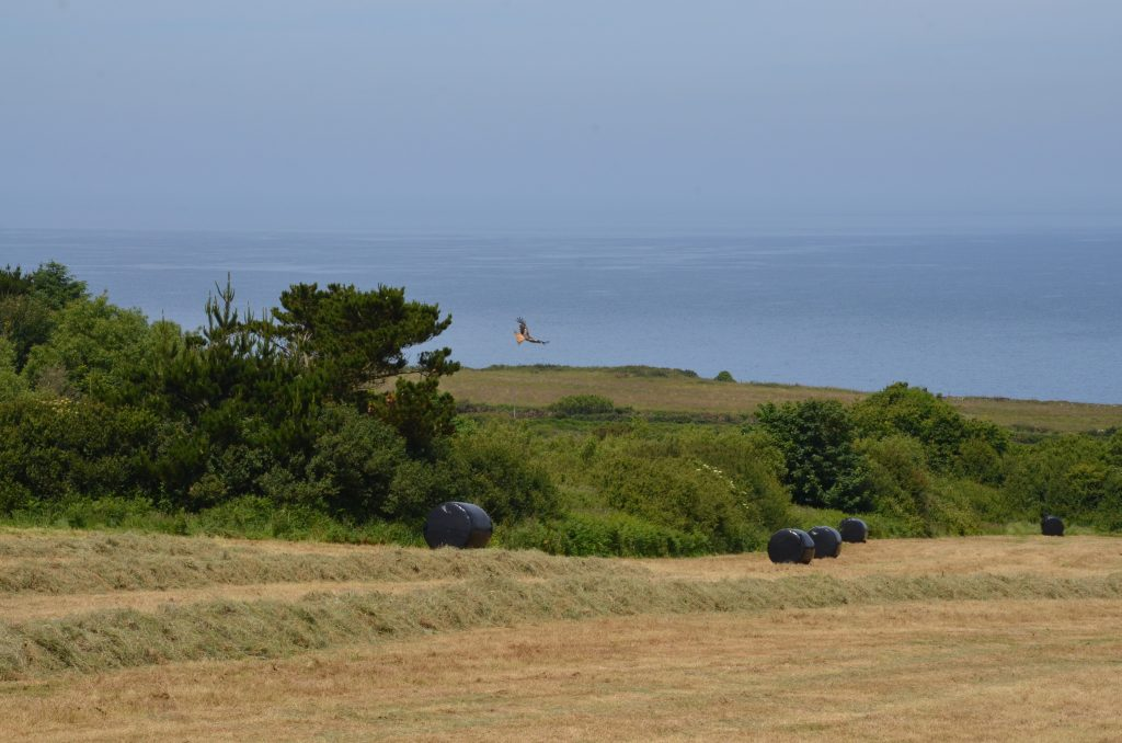 Yr Hafan holiday cottages country and coastal views - Red Kite circling our field