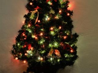 Yr Hafan   Pencaer Cottage   Pembrokeshire   Christmas Tree   Cosy Fire