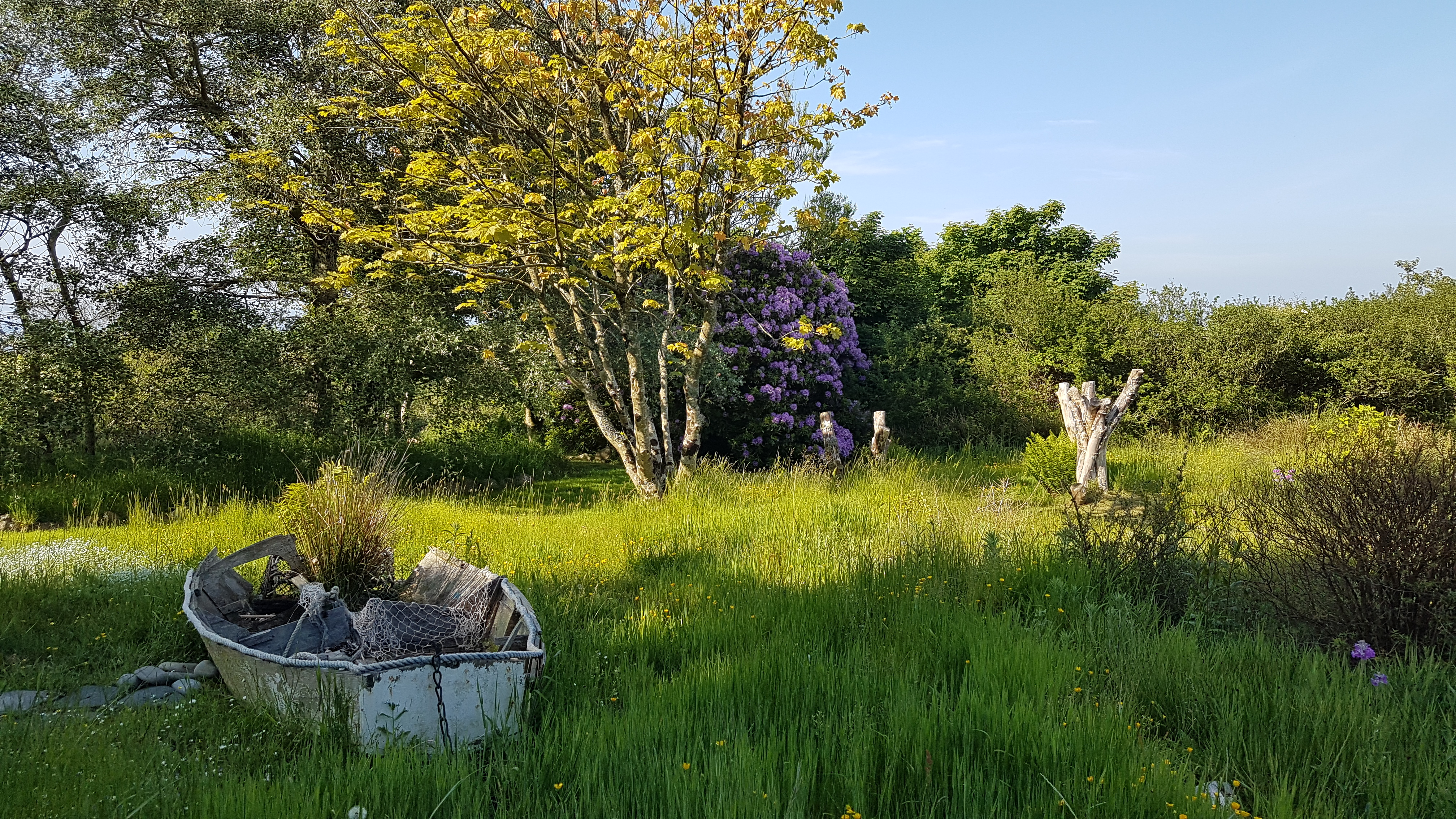 Yr Hafan landscaped gardens and beautiful Azela in Spring